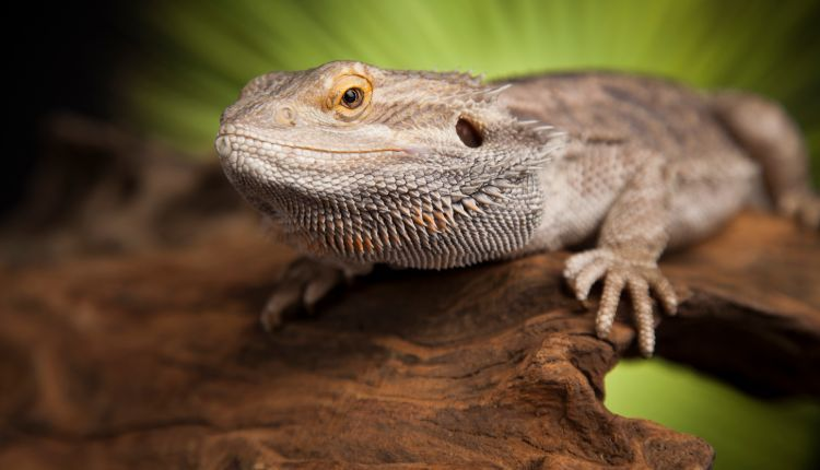 Best Reptile Thermostat