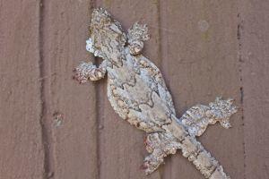 Gliding gecko