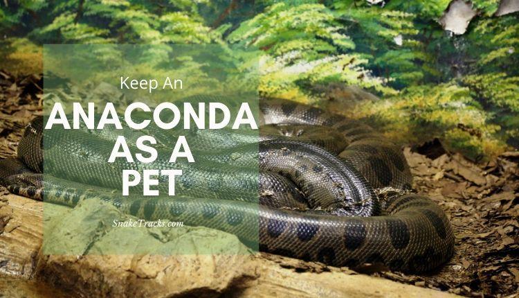 Anaconda As A Pet