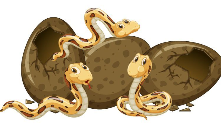 Gravid Snake