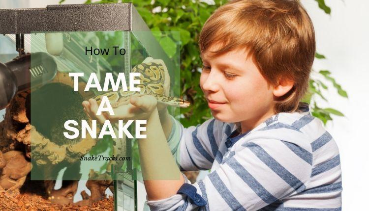 Tame a snake