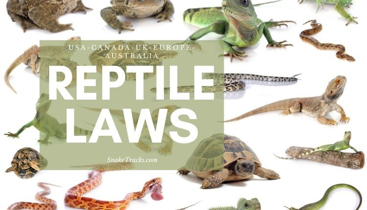 Reptile Laws