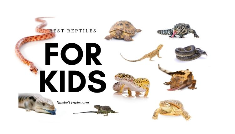Best Reptiles For Kids