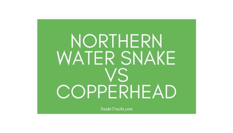 Northern Water Snake Vs Copperhead Snake