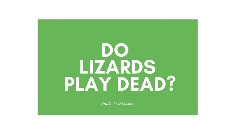 Do Lizards Play Dead