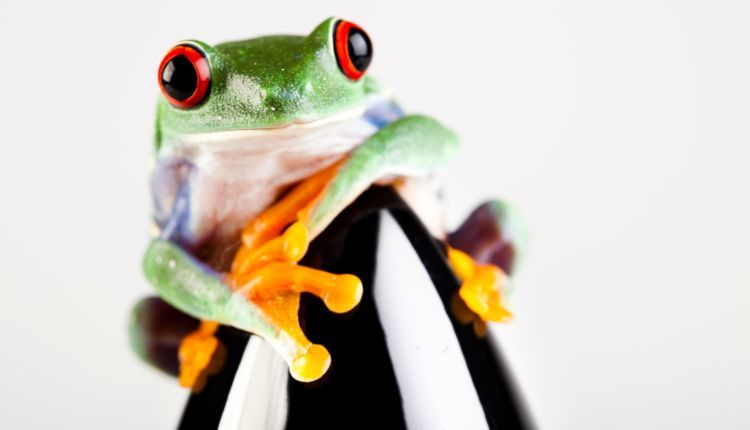 Best Pet Frogs
