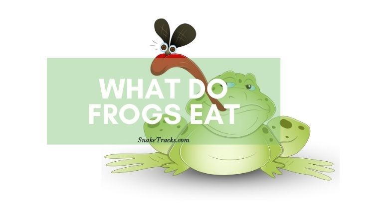 what do frogs eat