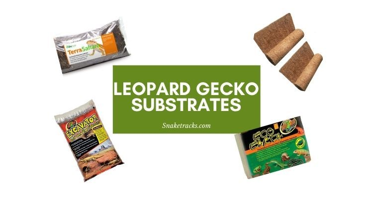 Best Substrate for Leopard Geckos