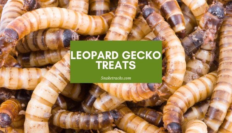 Leopard Gecko Treats