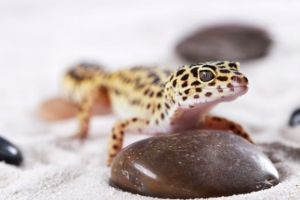 leopard gecko parasites